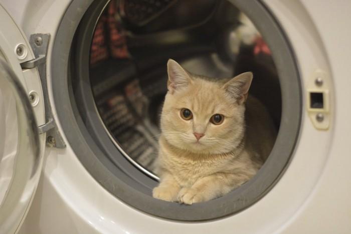 洗濯機の中でくつろいでいる猫