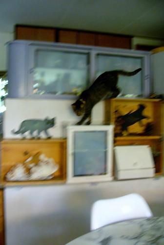 猫が階段を下りている写真