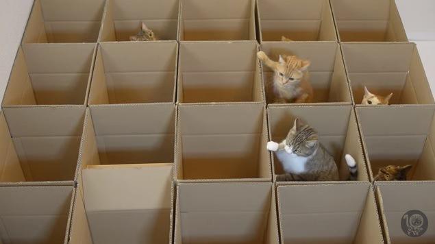 右側と後列に6匹の猫