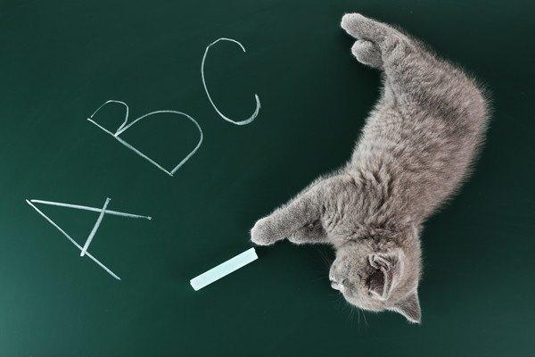 猫とチョークとアルファベット
