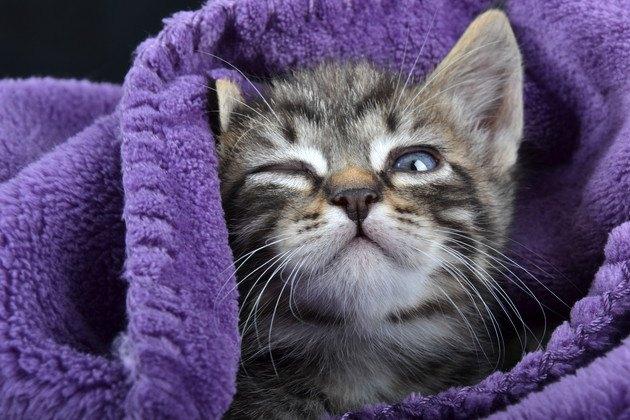 寝起きの子猫のアップ