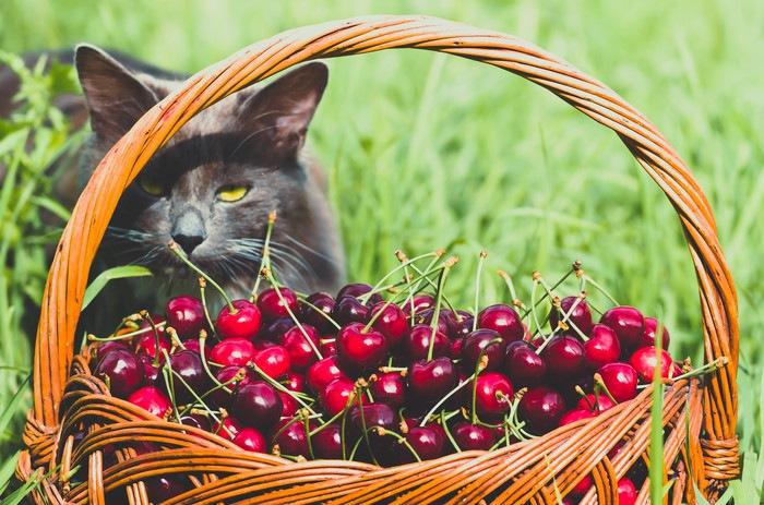 黒猫とさくらんぼ