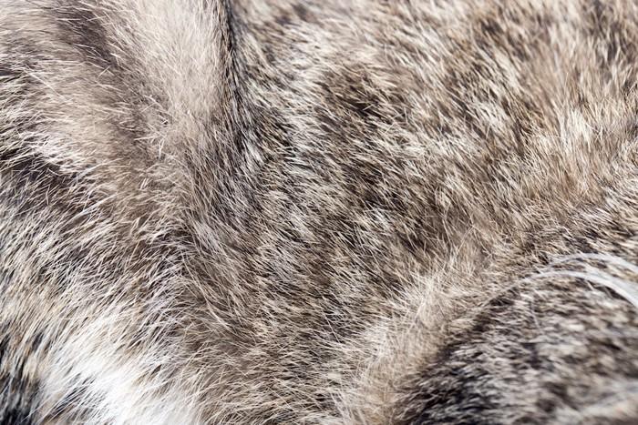猫の毛アップ