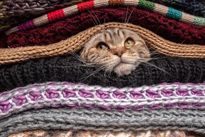 たくさんのブランケットの間に挟まる猫