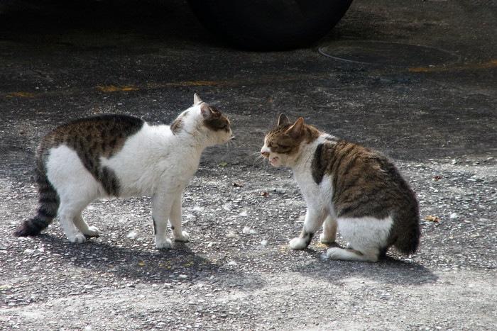 争う2匹の猫