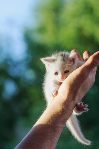 手にしがみついている子猫