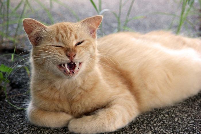 変顔した猫