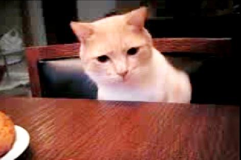悲しさを耐える猫