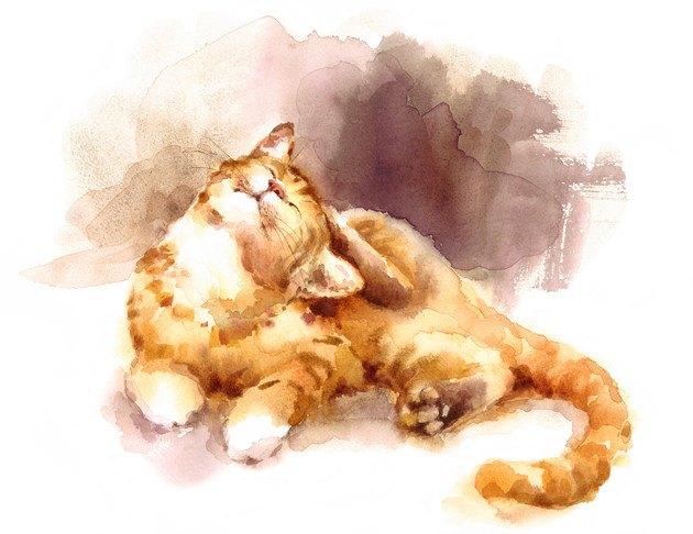 頭をかく猫のリアルなイラスト