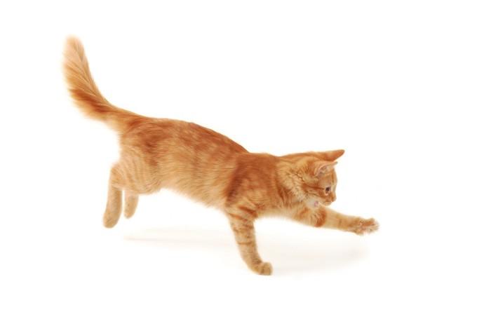 走って何かを追いかけている猫