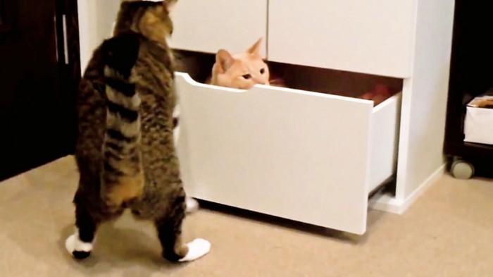 猫がひょっこり