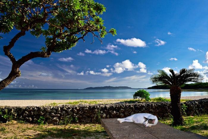 青空と海とくつろぐ野良猫