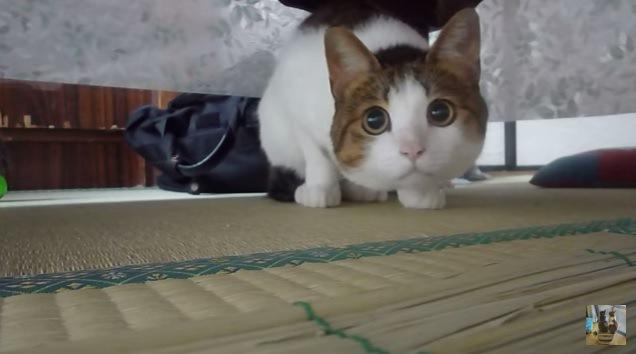 向かって左を見つめる猫