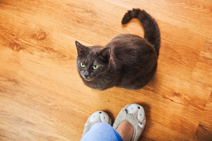 飼い主の足元に座るしつこいグレーの猫