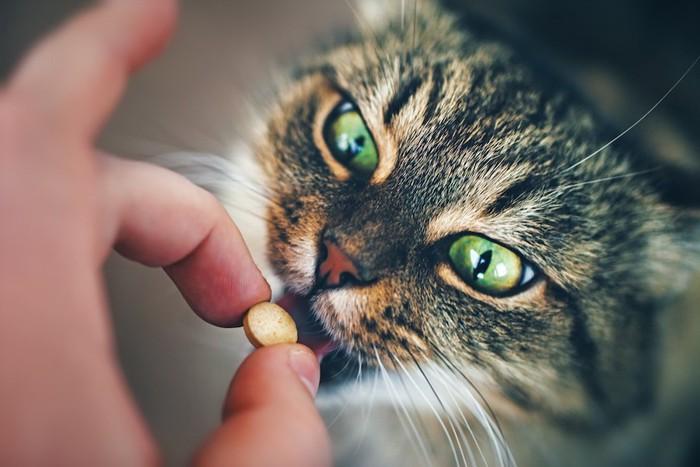 飼い主の手から薬を飲む猫