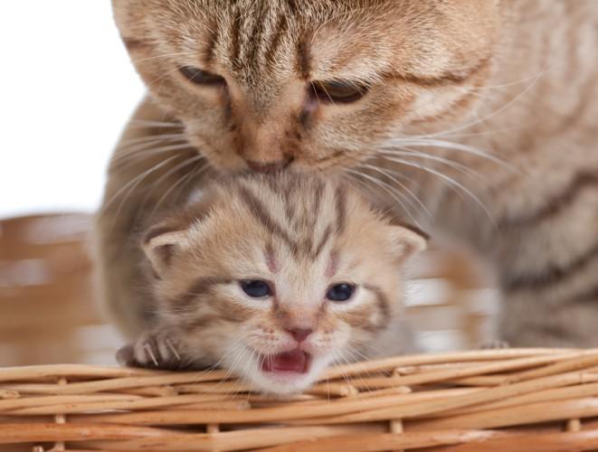 親猫からの愛情表現