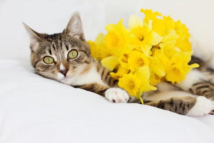 黄色い花とくつろぐ猫