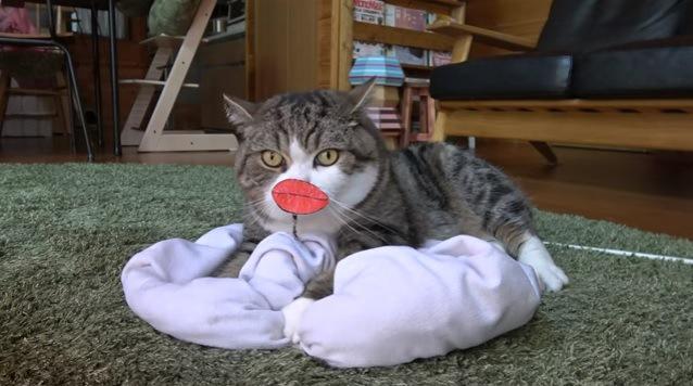 クッションに乗る猫(タラコ唇)