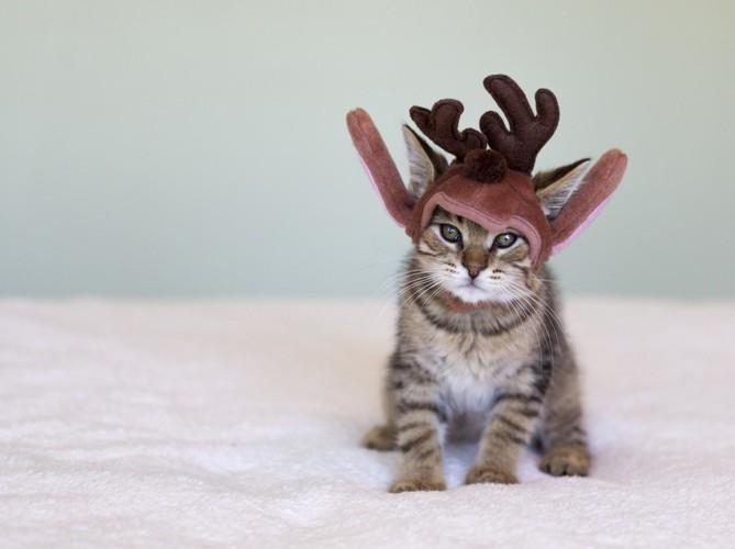 トナカイのかぶりものの子猫
