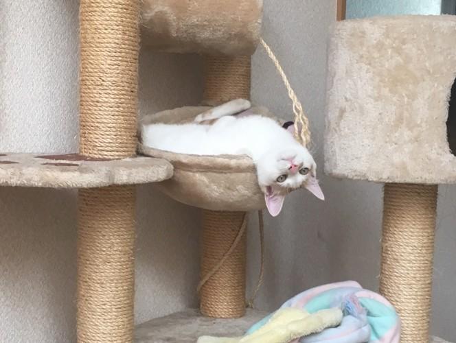 リラックスする猫