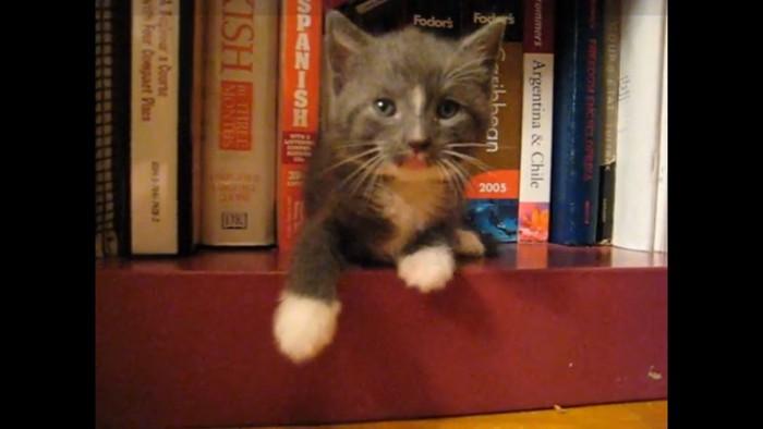 トボけ顔の猫