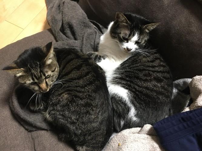 我が家の猫達