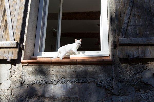 窓から入ろうとする白猫