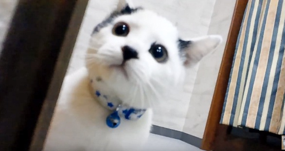きょとんとした表情で上を見る猫