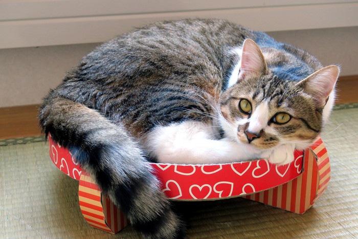 爪とぎの上で寝る猫の写真
