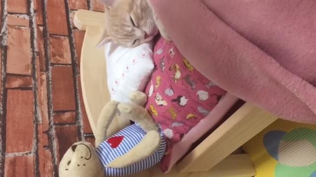 ベッドで眠る子猫(画面下にぬいぐるみ)