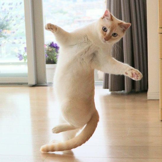 踊るチャコちゃん15