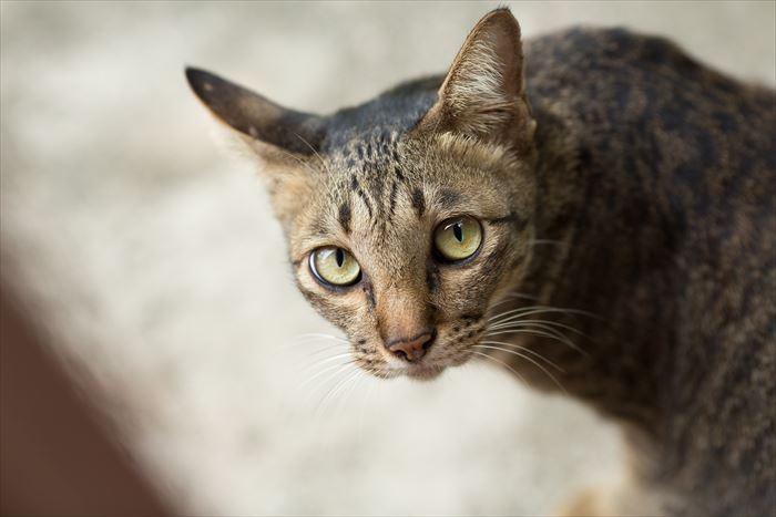 敷地内に侵入している野良猫