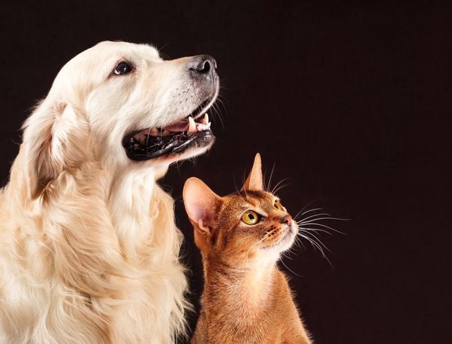 同じ方向を見る猫と犬