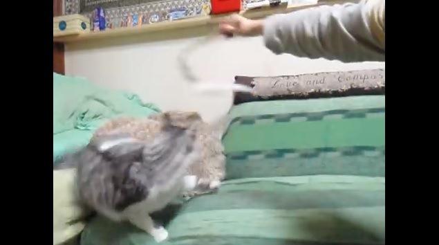 ソファから落ちかかる猫