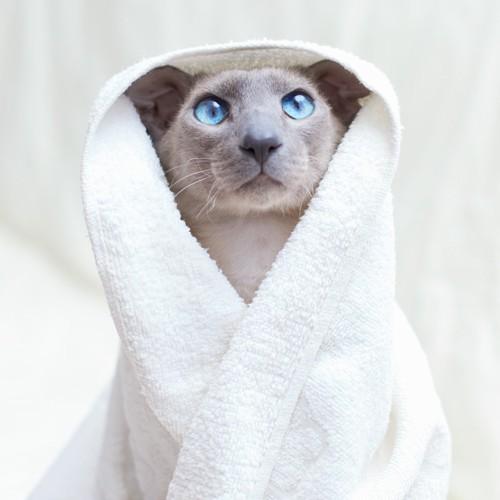 タオルに包まれている猫