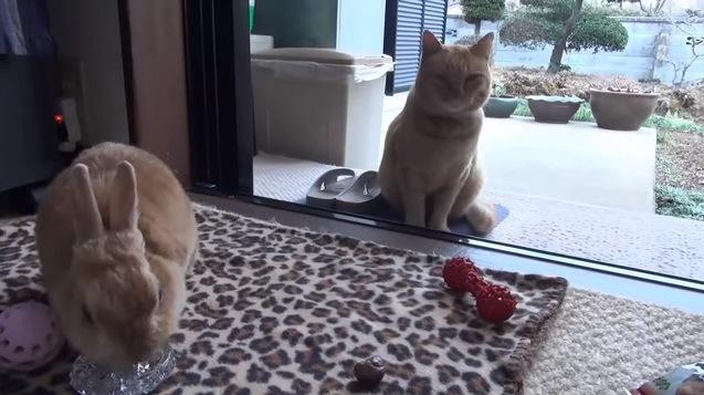 食事中のウサギを見つめる猫