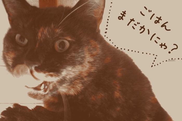 ベロをだしてる野良猫
