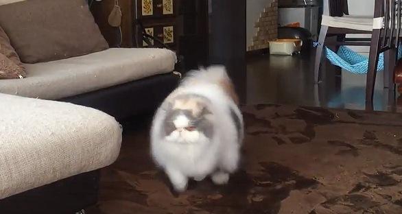 こちらに向かって走ってくる猫