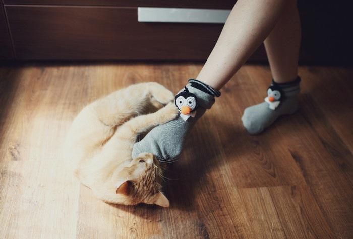 靴下を履いた足と遊ぶ猫
