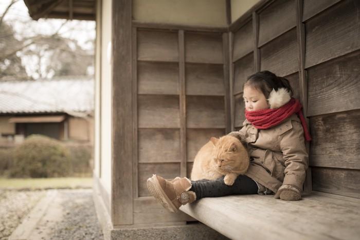 小さな子供の膝に乗る猫