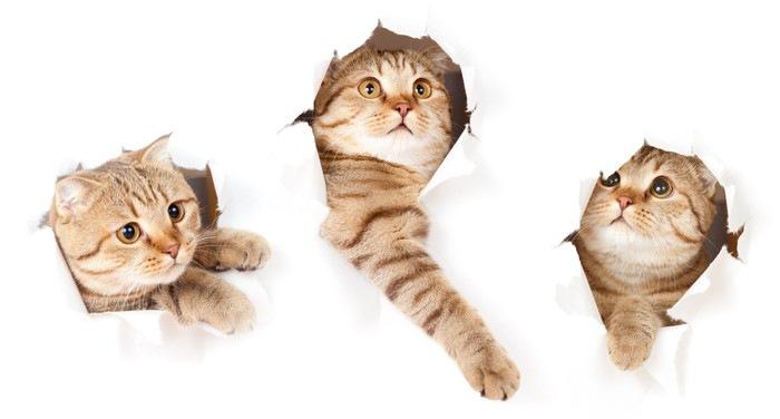 顔だけ出している猫の画像