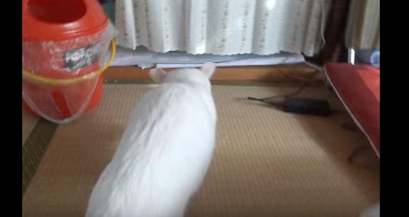 背中を向ける白猫