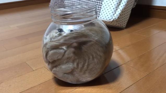 猫の入った瓶(横から撮影)