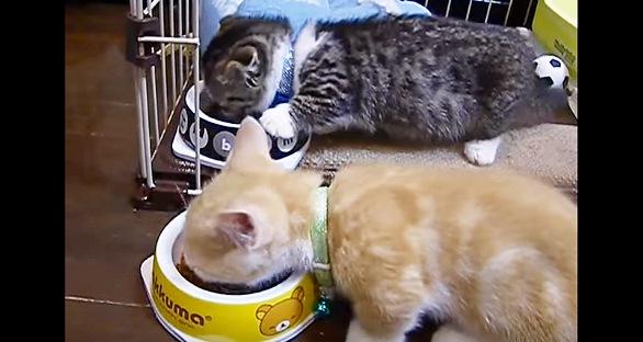 並んでご飯中の子猫