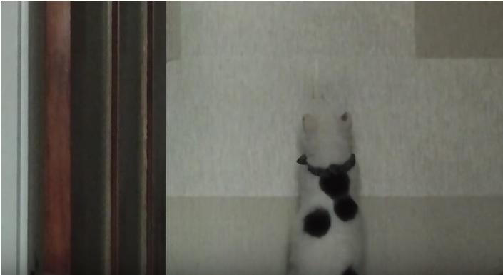 猫 後ろ姿