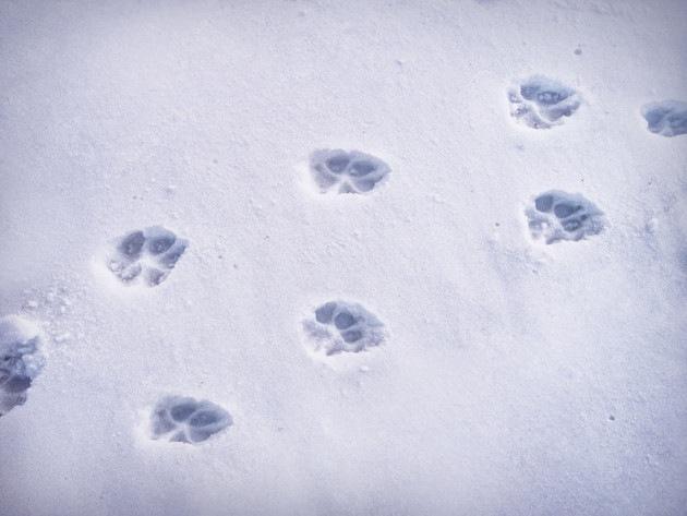 雪についた猫の足跡
