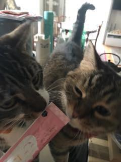にゃろみを堪能する猫達