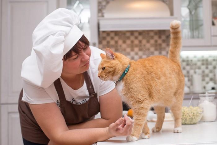 キッチンに居る猫と女性