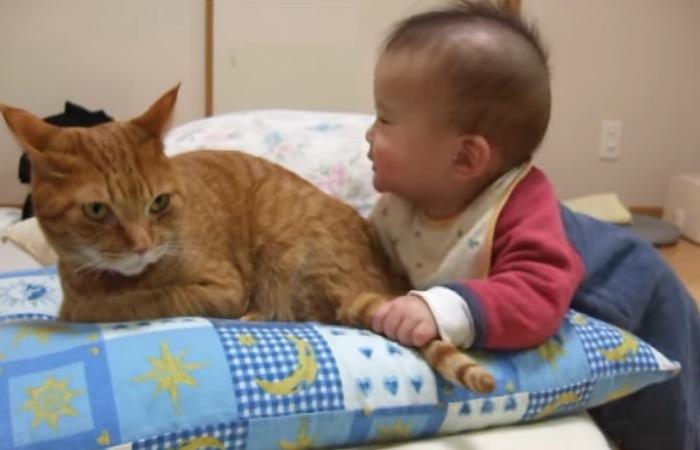 しっぽをつかまれた猫
