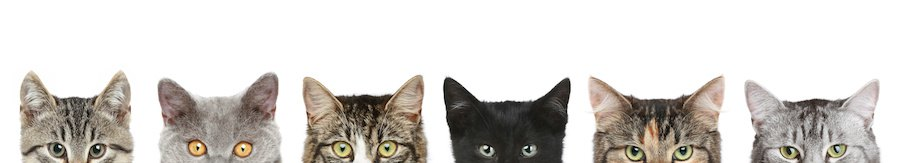 様々な種類の猫の顔